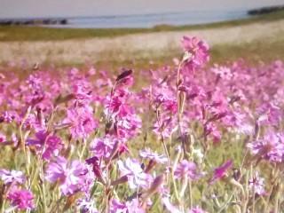 tutela-dune-flora-senigallia-320x240