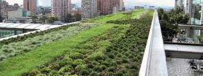 tetto-verde3