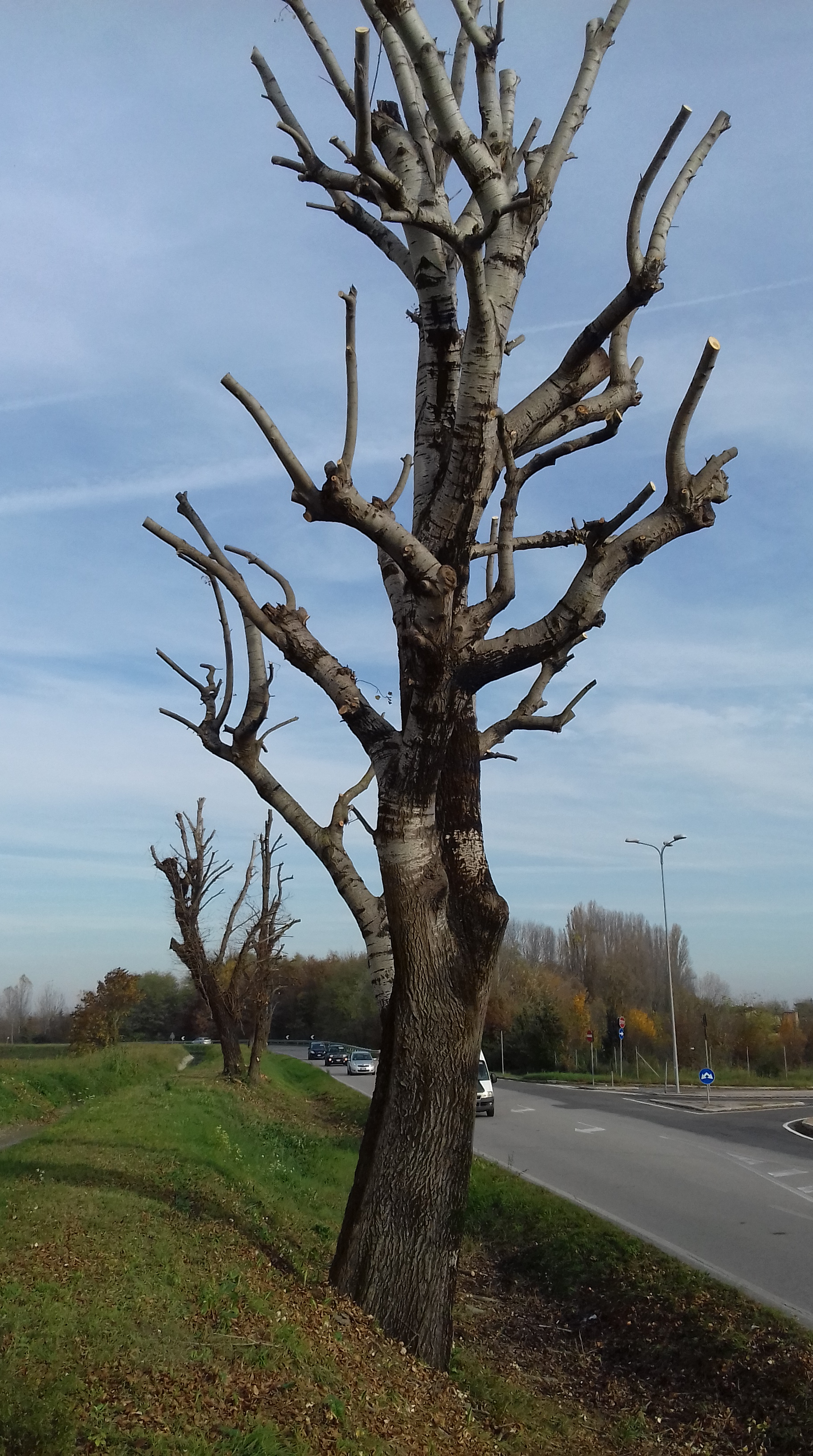 Immagini Di Piante E Alberi la manutenzione del verde e le capitozzature degli alberi